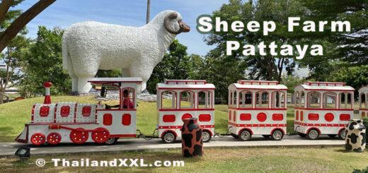 Sheep Farm Pattaya Schaffarm