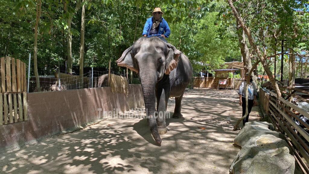 Elefanten überall im Dorf