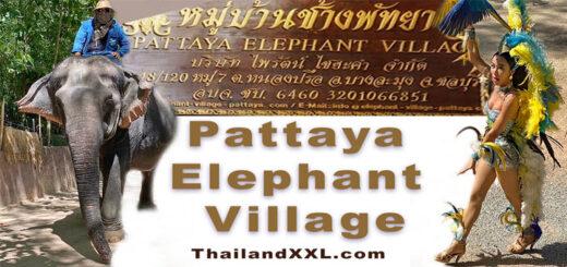elephant village Pattaya Elefanten Dorf